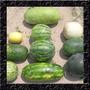Melancia Kit 4 Variedades - Sementes Fruta Para Mudas