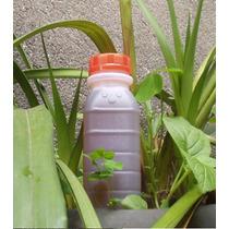 Chorume - Composto Orgânico Vertilisante Para Plantas