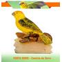 Porta Nome Pássaro Em Resina Canário Da Terra Para Gaiolas