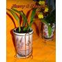 Vasos De Plantas Decorativos