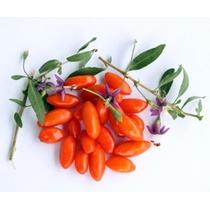 100 Sementes Da Super Fruta Goji Berry Do Tibet Frete Grátis