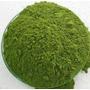 Moringa Oleifera Pó 100gramas Frete Gratis 100% Organico