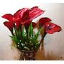 Flor De Silicone Copo Leite Vermelho, Unitario