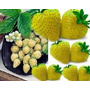 20 Sementes De Morango Amarelo - Frete Grátis