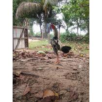 Vendo Ovos Da Raça Índio Gigante E Também Vendemos Aves