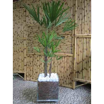 Palmeira Rafia No Cachepot Desconto De 30%