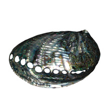 Concha Natural Abalone Furta-cor Envernizada Polida 19x13x5