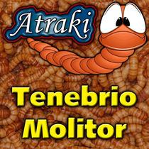 100 Larvas Vivas Tenebrio Molitor