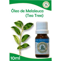 01 Óleo Essencial De Tea Tree - (melaleuca Alternifólia)