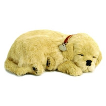 Cachorro Golden Retriver Que Respira Filhote Perfect Petzzz