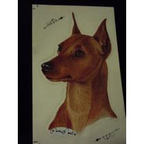 Pinscher Adesivos De Cães Para Carros, Dupla Face.