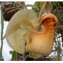 Documentário Sobre Orquídeas - Compilação Do Autor