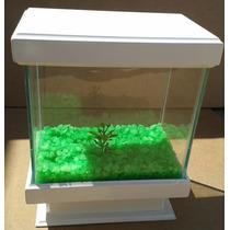 Aquario Beteira 4 Litros - Com Iluminação Lançamento