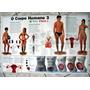 Poster O Corpo Humano 3 - Ap. Reprodutivo / Frete À Cobrar