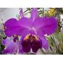 Orquídeas - Compilação O Autor. Imagens + De 1000 Espécies