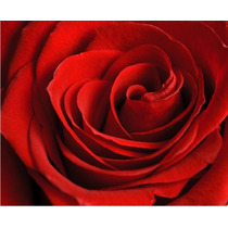 Painel Adesivo De Parede Decorativo Rosas Rln123 Roseira