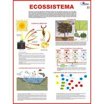 Mapa De Ecologia: Ecossistema Cadeia Alimentar Fotossíntese