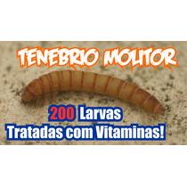 Tenébrio Molitor 200 Larvas Especiais Tratadas Com Vitamina