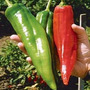 Numex Big Jim Chili Pepper Pimenta Gigante Sementes P/ Mudas