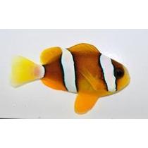 Peixe Palhaço Clarkii 2 A 3 Cm, Nemo, Marinho