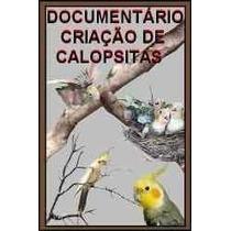 Fantástico Documentário Calopsitas + Brindes!