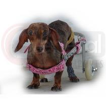 Cadeira De Rodas Para Cães Pequeno Somos Fabrica Em Sp
