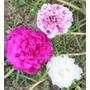 Muda De Flor Onze Horas