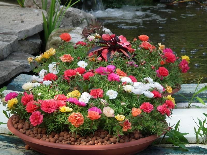 Flores Para Jardineiras Que Florescem O Ano Todo
