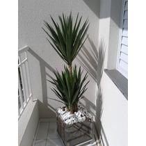Palmeira Yuca No Cachepo De Vidro 35x35