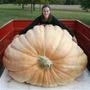 Abóbora Atlantic Gigante Até 600kg Sementes Recorde Guinness