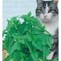 Sementes De Catnip - Envelope C/ 600 Sementes - Frete Grátis