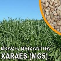 Brachiaria Brizantha Mg-5 - 20kg - Frete Grátis Brasil