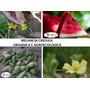 Melancia Organica Crioula 100 Sementes Frete Gratis