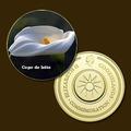 10217 - Flor (copo De Leite) - Banhada A Ouro 24 K - 40 Mm