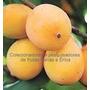 Muda De Achachairú Uma Das Melhores Frutas Do Mundo