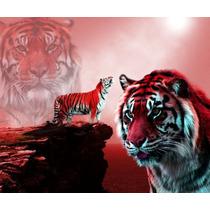 Muda De Rosa Roseira, Tigre Vermelho