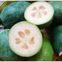 Muda De Goiaba Serrana Deliciosa E Com Sabor De Abacaxi