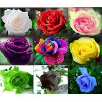 Rosas Exóticas 45 Sementes De 9 Cores Diferentes(5 De Cada)