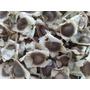 Moringa Oleifera - 100 Sementes Frescas