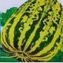 Sementes De Melão Tigre Raro Exótico