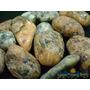 Granito Unid. 2cm Pedra Gema Natural Polida P/ Coleção
