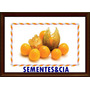 Physalis Fruta Exótica 200 Sementes + Brinde