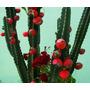 Mandacaru Fruta Exotica 30 Sementes* Frete Gratis*