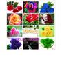 120 Sementes De Lindas Rosas Exóticas 12 Tipos E Cores
