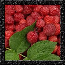 Amora Vermelha - Rubus Rosifolius - Sementes Frutas P/ Mudas