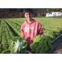 Nutrientes 100% Completo Hidroponia Fertilizante Terra Horta