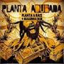 Cd Planta E Raiz - Buguinha Dub - Planta Adubada - Lacrado