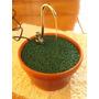 Bebedouro De Água Para Cães E Gatos - 110 Ou 220 V -