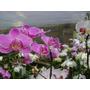 Tinta Spray Para Flores Naturais,e Decorações Varias Cores.
