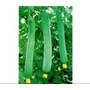 40 Sementes De Bucha Vegetal Para Mudas-frete Gratis+manual